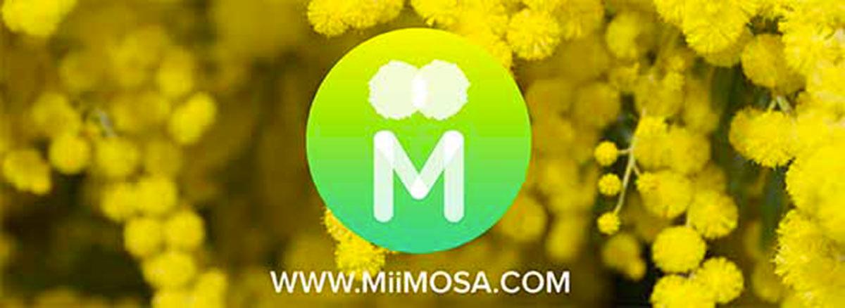 actu_mimosa--opt