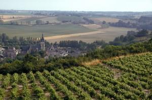Vigne / Viticulture / Vignoble et paysage du Saumurois, en Val de Loire, en ŽtŽ