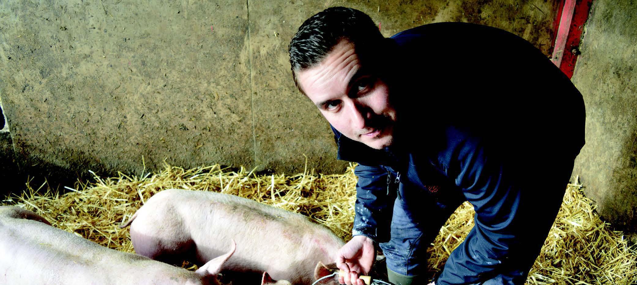 francois castelin cochon recadré